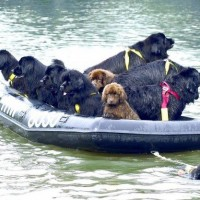 immagini-animali-cani-salvataggio