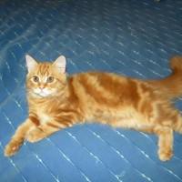immagini-animali-gatto