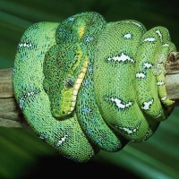 immagini-animali-serpente