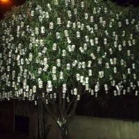 immagini-cose-curiose-albero-birra