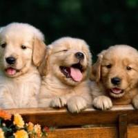 immagini-cucciolotti-cane