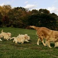 immagine-cuccioli-cani-mamma