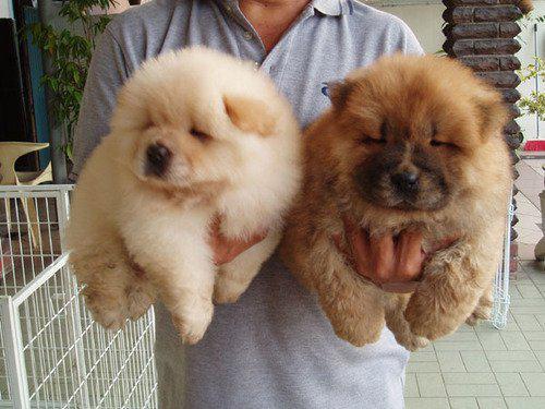 Immagini Cuccioli Foto E Sfondi Di Cuccioli Di Cane