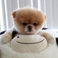 immagine-cucciolo-cane-peluches