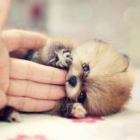 immagine-cucciolo-cane-tenero
