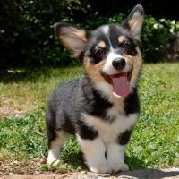 immagine-cagnolino