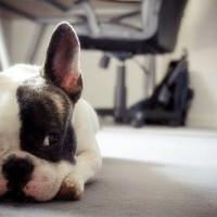immagini-cucciolo-cane