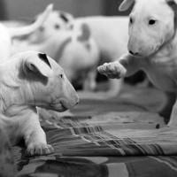 immagini-cuccioli-cane