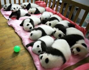 immagini-cuccioli-9