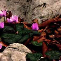 immagini-natura-fiori