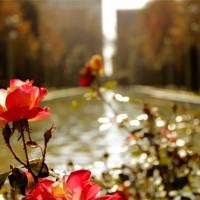 immagini-natura-fiori-acqua