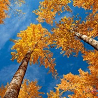 immagini-natura-alberi-autunno