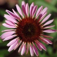 immagini-natura-fiore