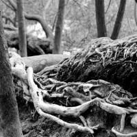immagini-paesaggi-sfondi-radici-bosco