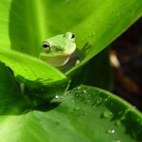 immagini-sfondi-ipad-foglie-rana