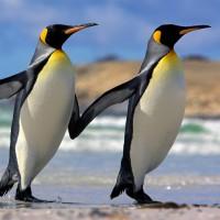 immagini-sfondi-ipad-pinguini