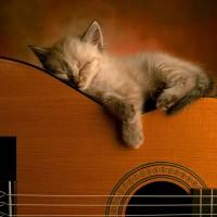 immagini-sfondi-ipad-gatto-chitarra