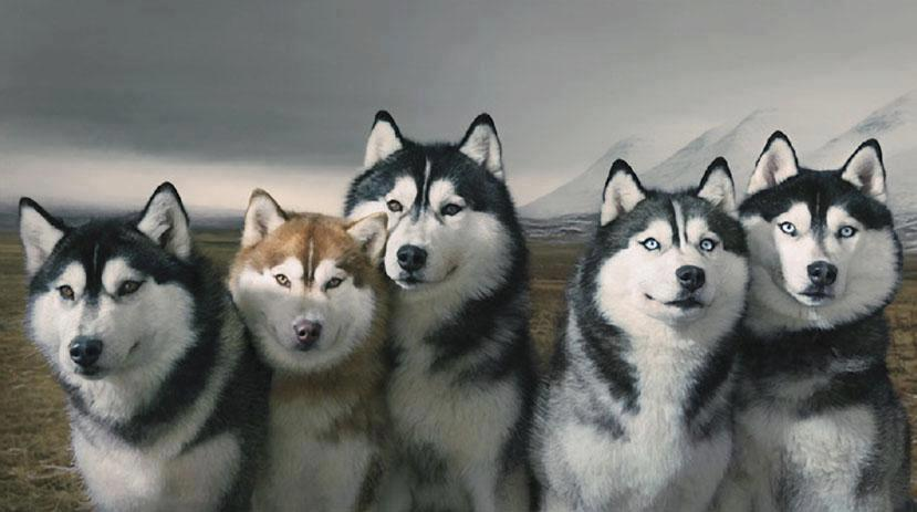 Top Foto e sfondi di lupi e cuccioli lupi2 – Immagini e Sfondi DQ05