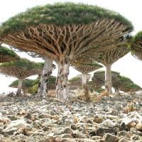 immagini-natura-albero-ombrello